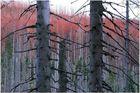 Wald ( Totes Holz )