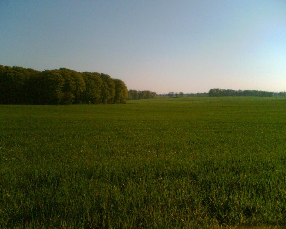 Wald und Feld ^^