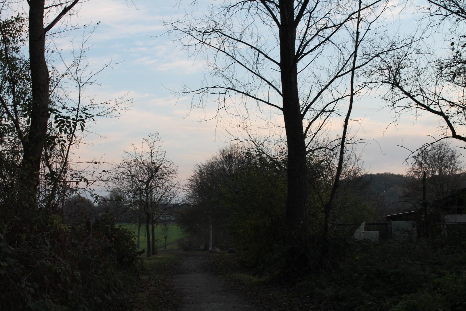 Wald- und Feldweg