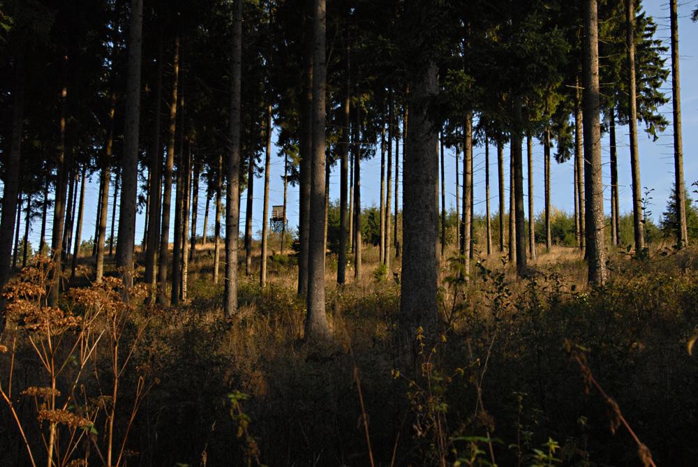Wald und Hochsitz