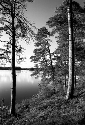 Wald und See in Schweden