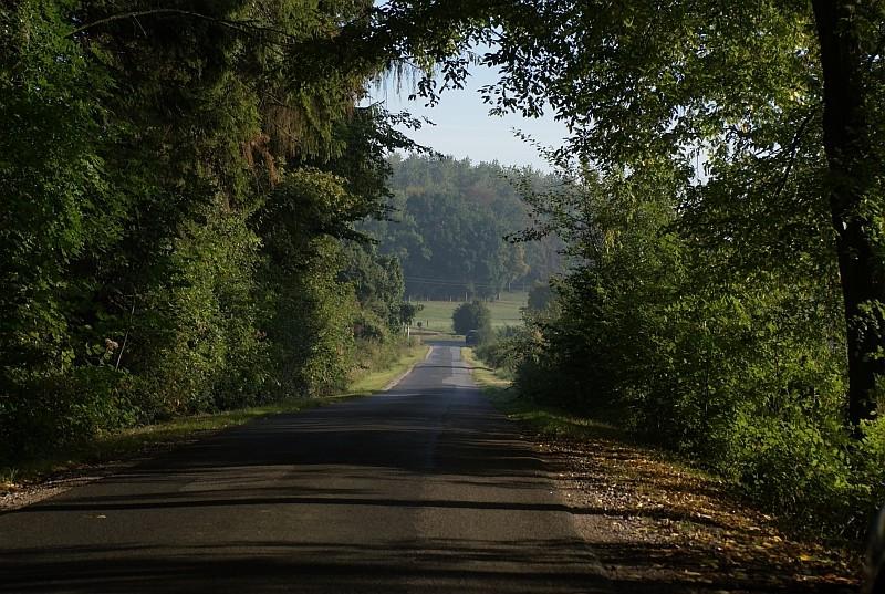 Wald und Wege