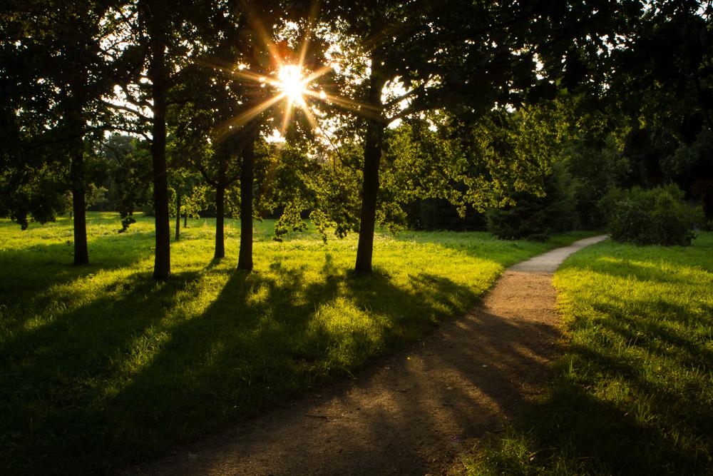 Wald- und Wiesenfoto