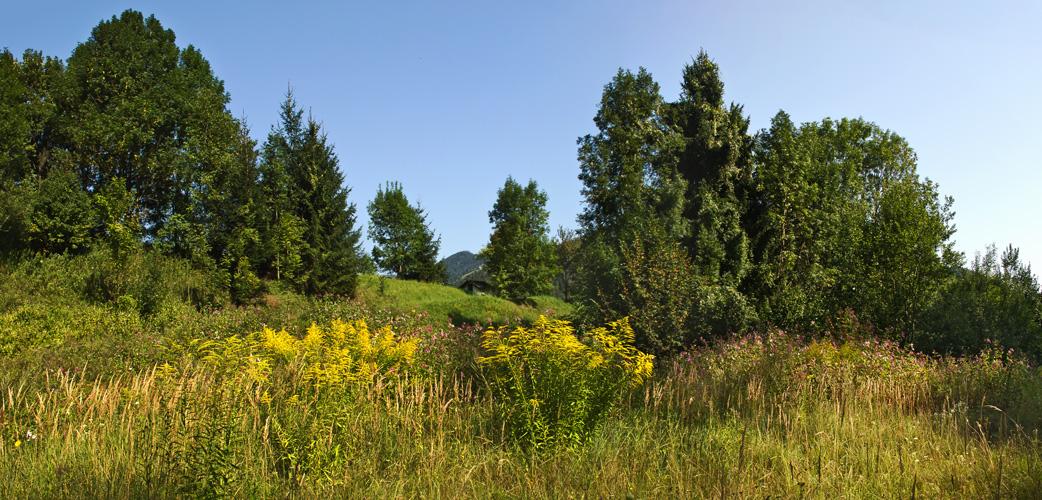 Wald- und Wiesenlandschaft im September!