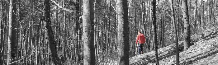 Wald voller Bäumen