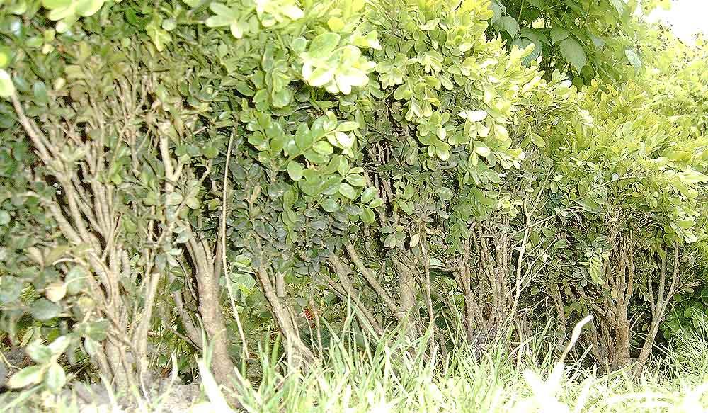Wald vorgetäuscht