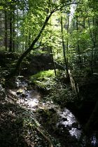 Wald, Wasser, Licht und Schatten