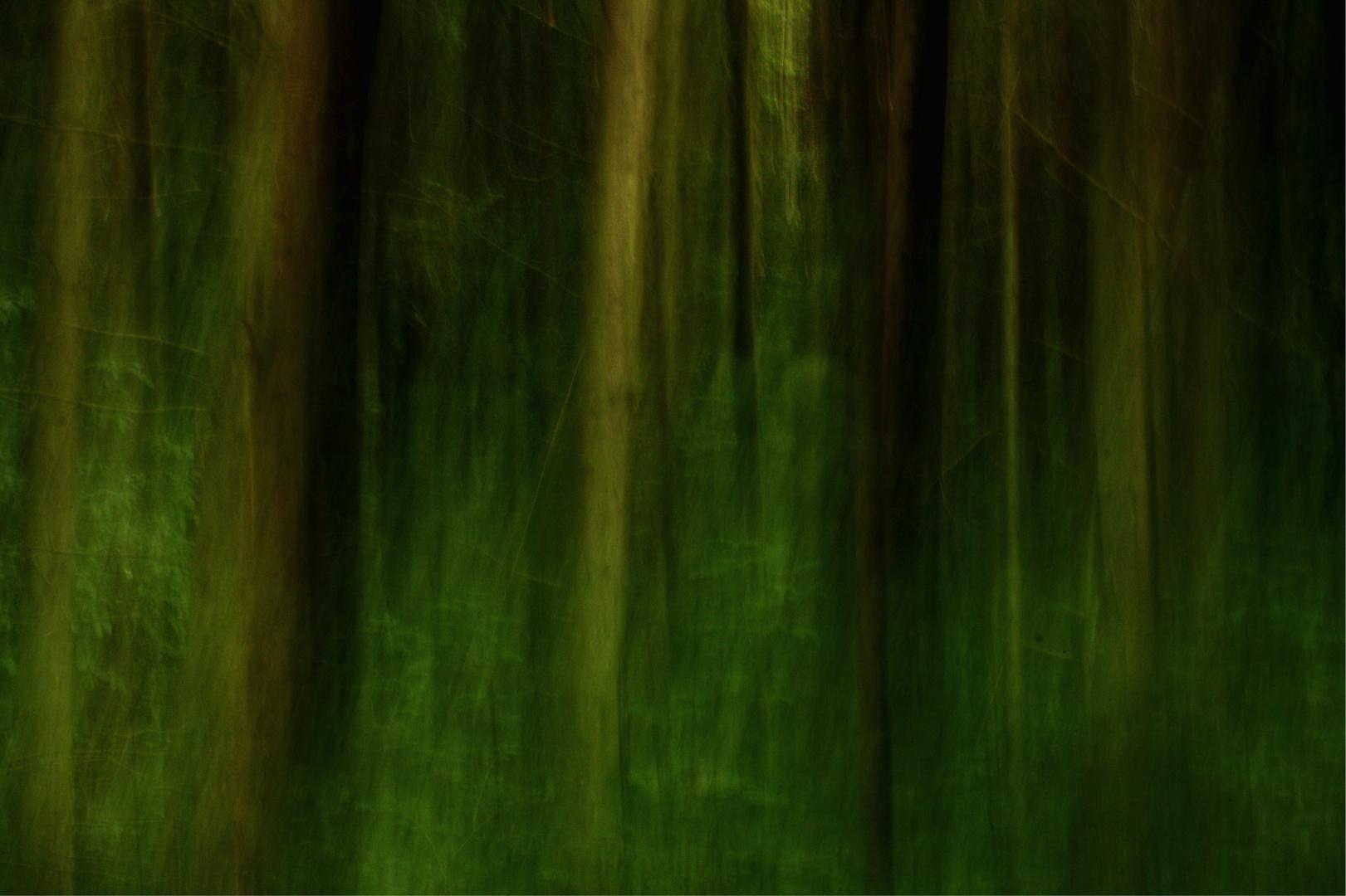 Wald wie gemalt