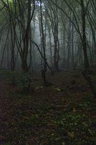 Wald#01