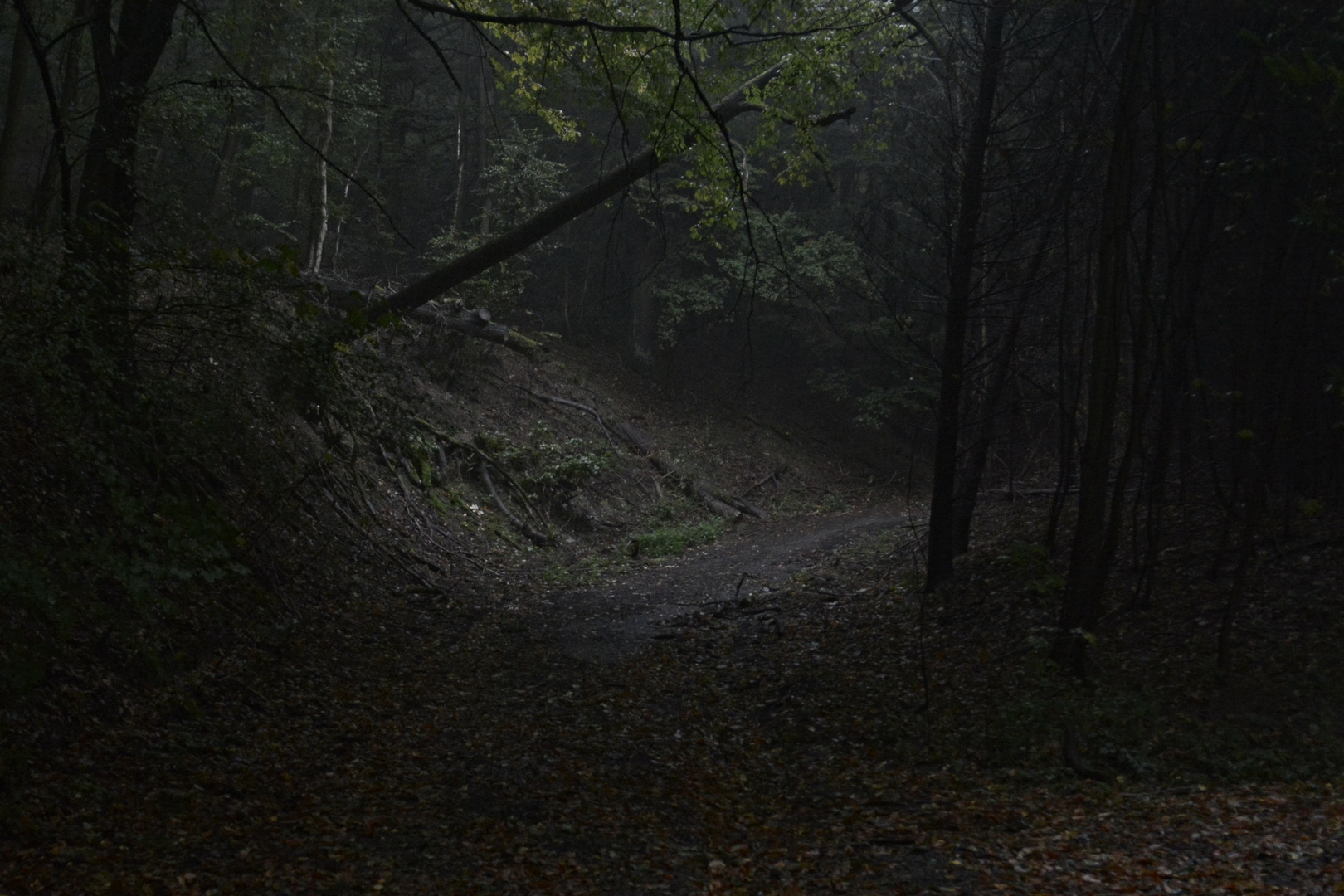 Wald#2