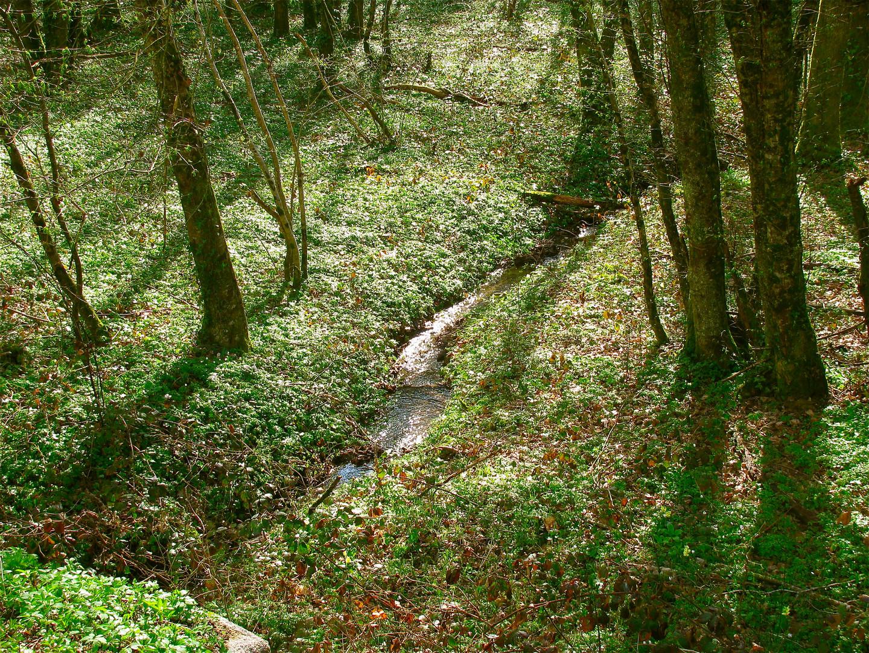 ..Wald..2 ..