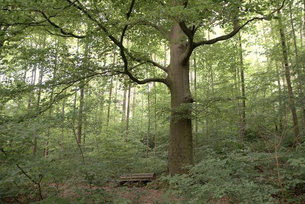 Wald25