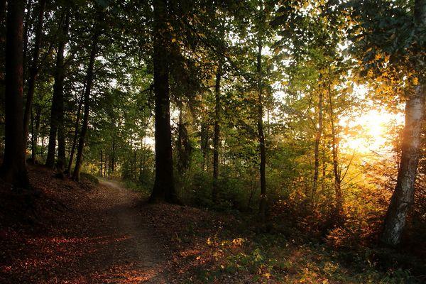 Waldabend