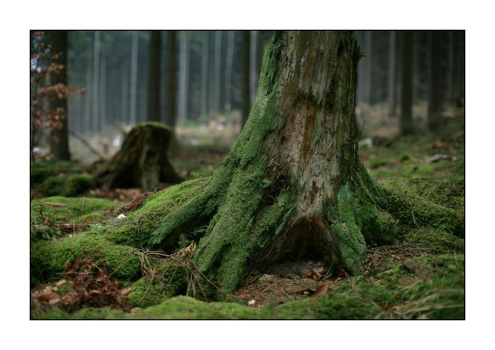 Waldansichten (111)