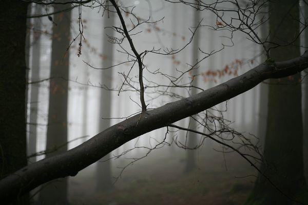 Waldansichten (74)