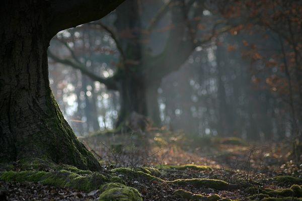 Waldansichten (78)