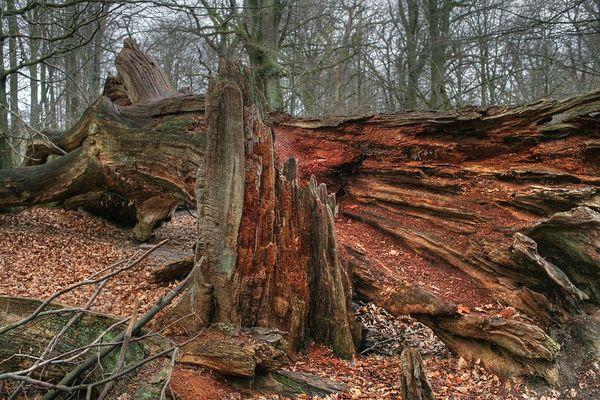Waldansichten (81)