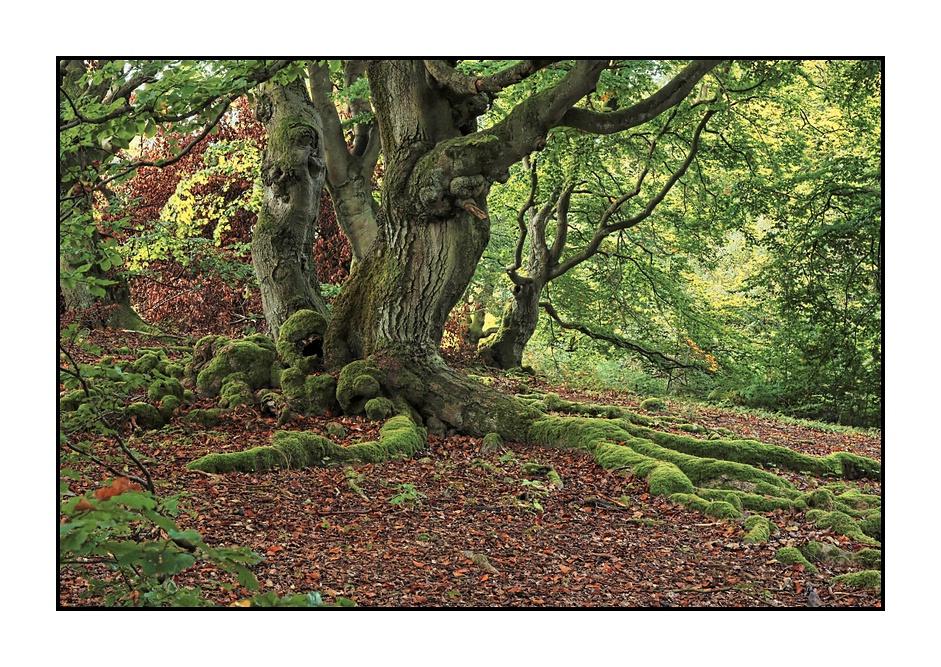 Waldansichten (94)