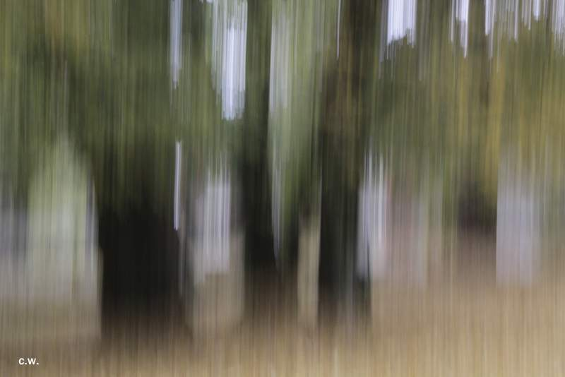 .....Wald.Art.....