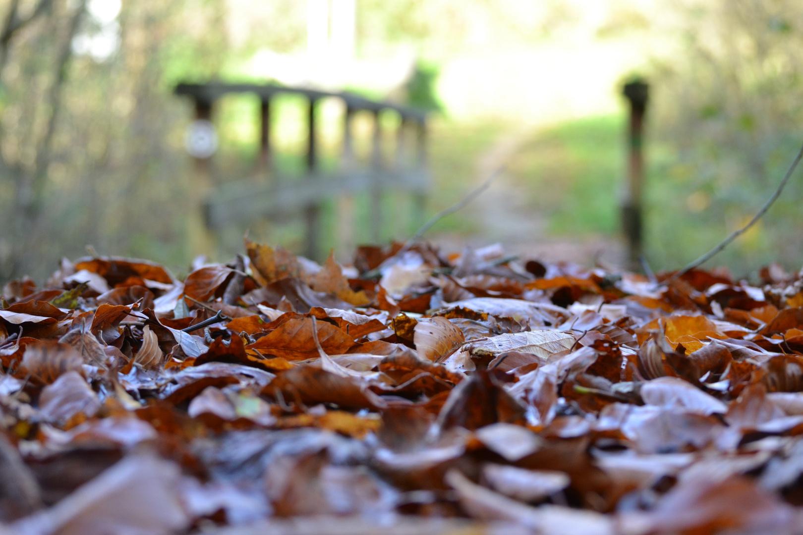 Waldaufnahme im Herbst