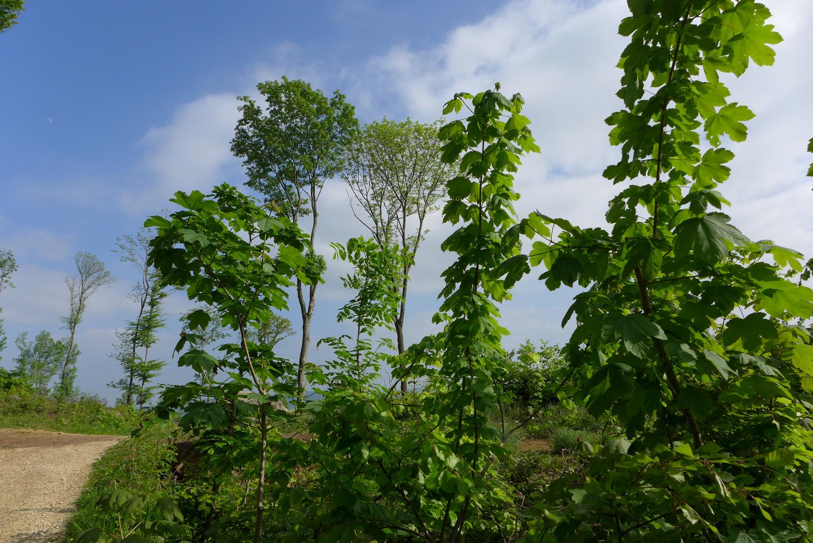 Waldausflug auf dem Galgenberg