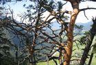 Waldausschnitt
