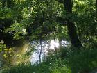 Waldbach