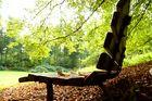 Waldbank mit Laub