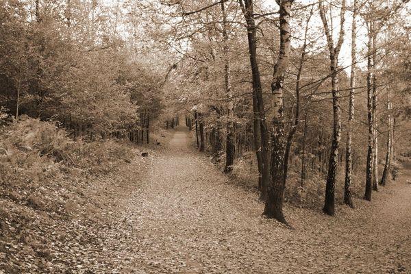 Waldbild mit Fluchtpunkt