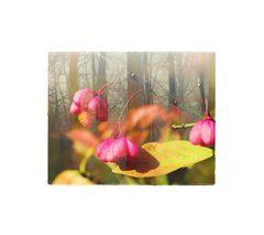 - waldblümchen -