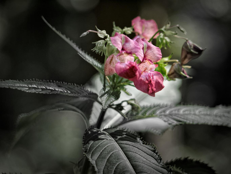 Waldblümchen