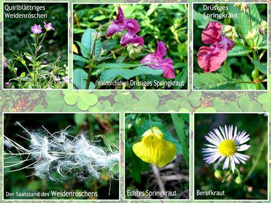 Waldblumen - überarbeitet