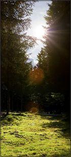 Waldboden auf Moos