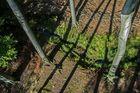 """Waldboden aus der """"Baumkronen-Perspektive"""""""