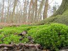 Waldboden