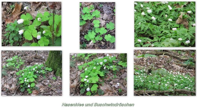 Waldboden im April
