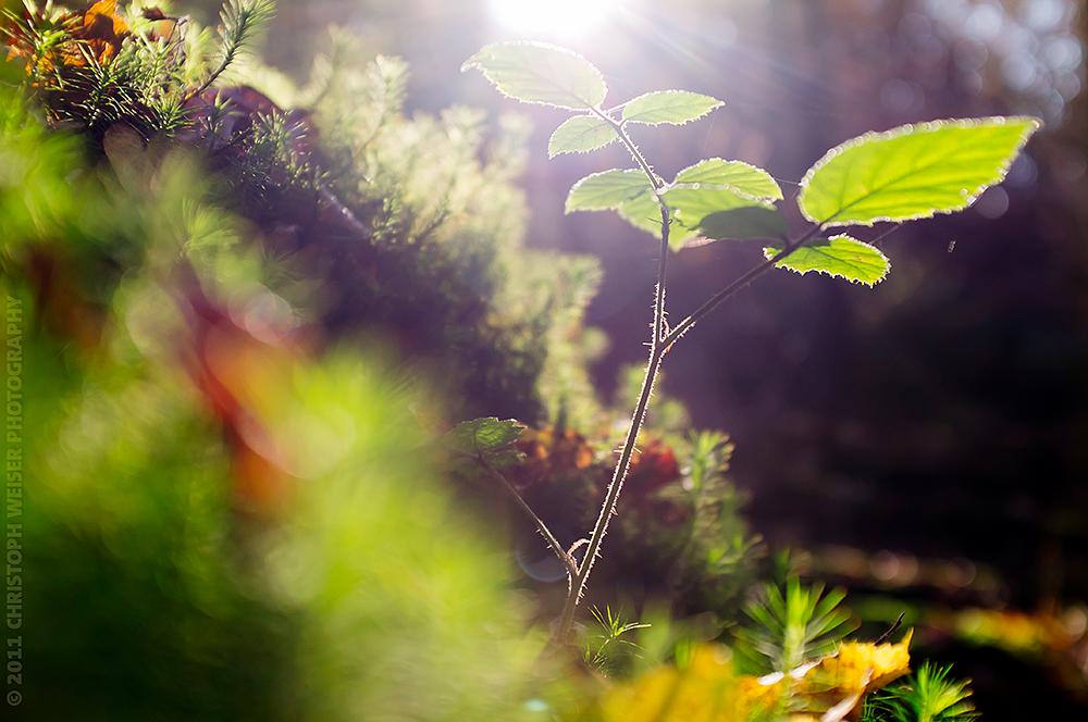 Waldboden im Herbst(gegen)licht 2