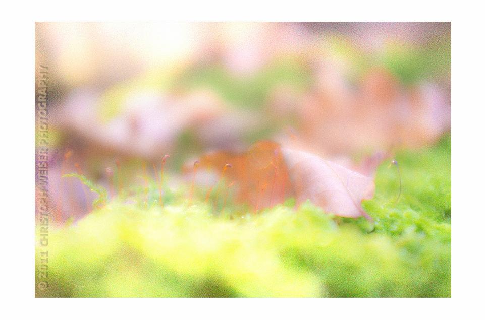 Waldboden im Herbstlicht | close up