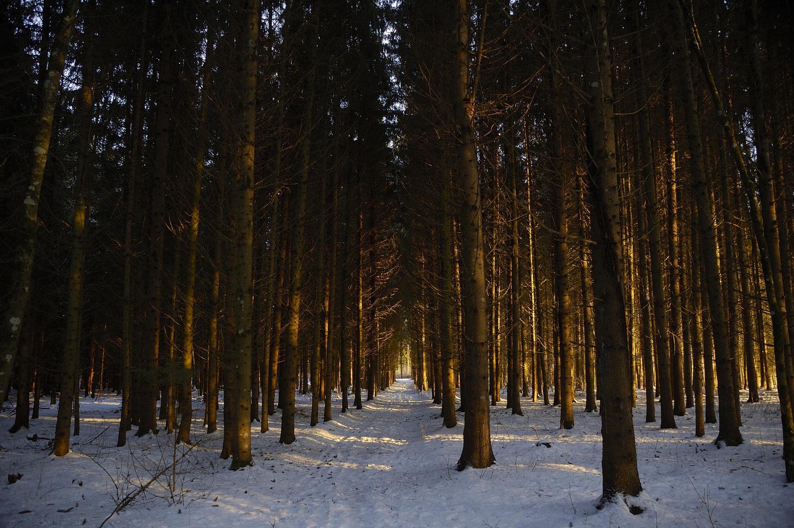 Waldboden im Winter