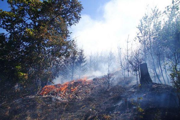 Waldbrand im Hochsommer