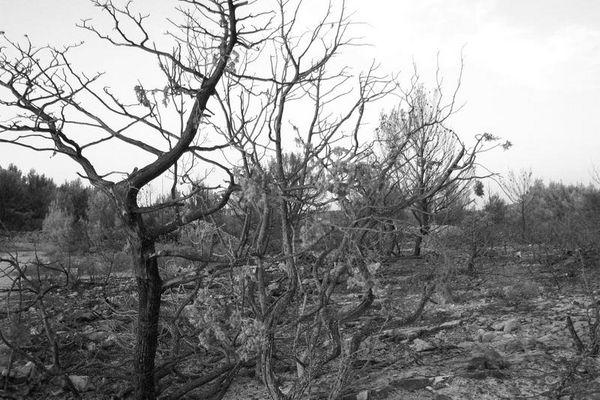 Waldbrandgebiet