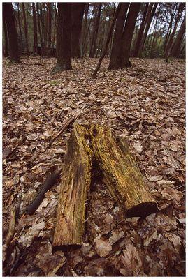 Walderotik
