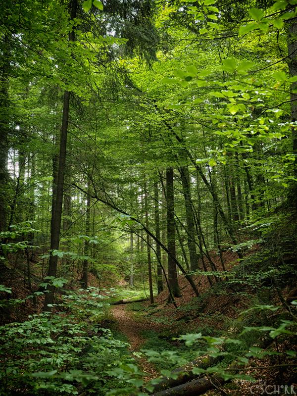 Waldesgrün