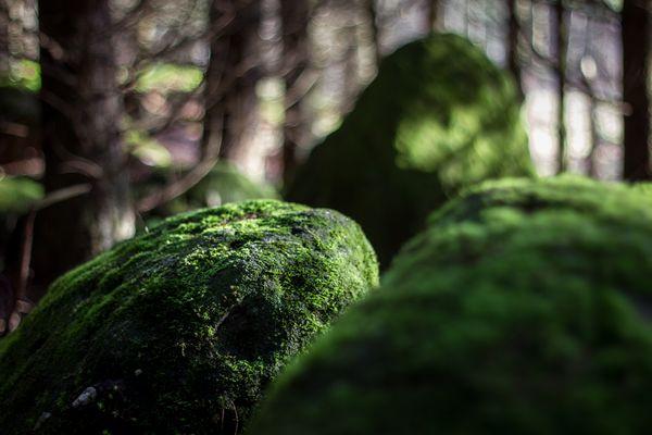 Waldesstille ..