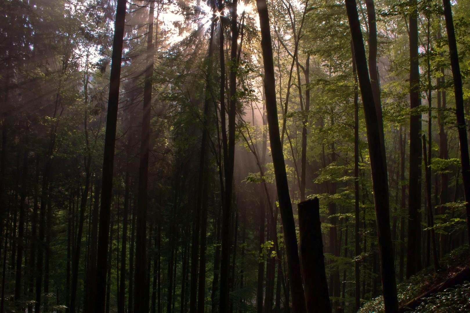 Waldfeeling