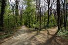 Waldfrühling 2