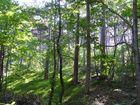 Waldfrühling