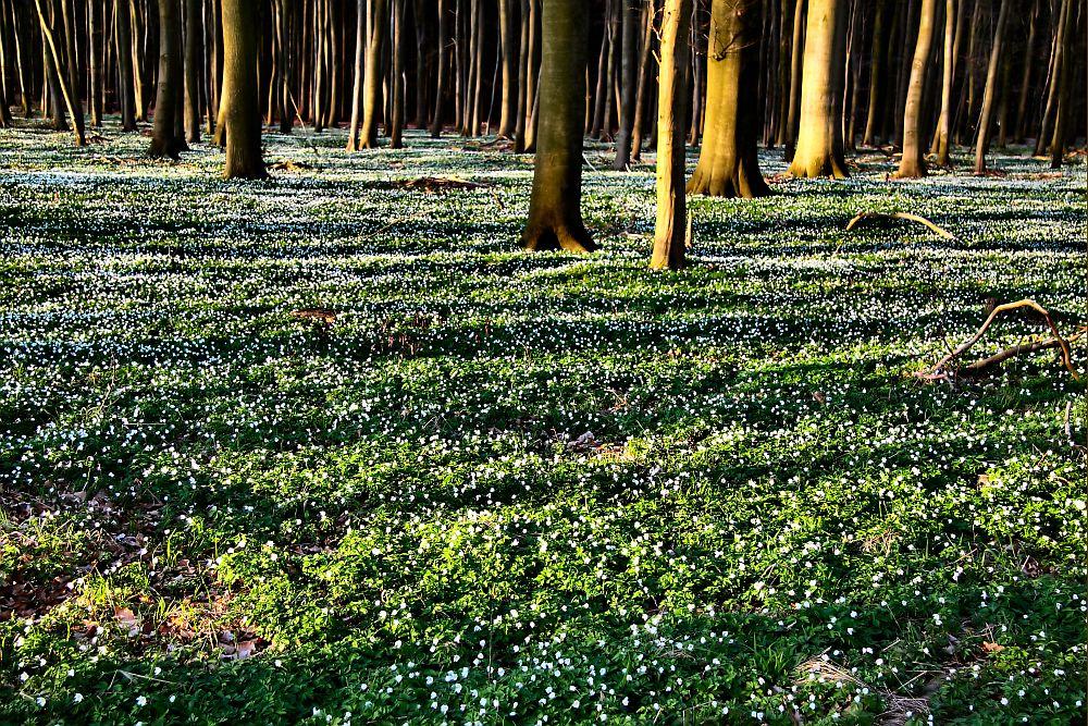 Waldfrühling...