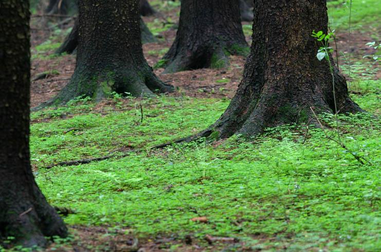 Waldfüße