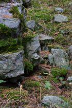 Waldgeist - Geist des Waldes